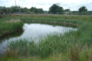 Dunniflats 4 pond in summer