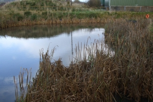 Dunniflats 5 pond in autumn