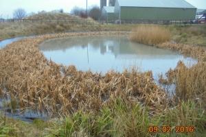 Dunniflats 6 pond in winter