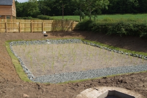 Purclewan 1 reedbed planted
